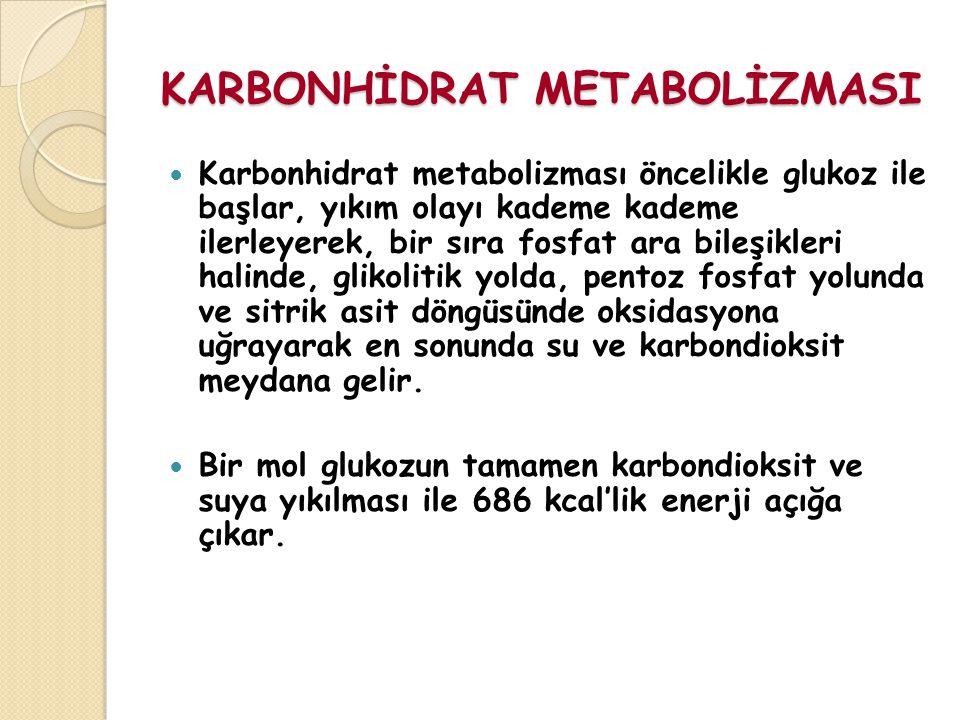 KARBONHİDRAT METABOLİZMASI Karbonhidrat metabolizması öncelikle glukoz ile başlar, yıkım olayı kademe kademe ilerleyerek, bir sıra fosfat ara bileşikleri halinde, glikolitik yolda, pentoz fosfat yolunda ve sitrik asit döngüsünde oksidasyona uğrayarak en sonunda su ve karbondioksit meydana gelir.