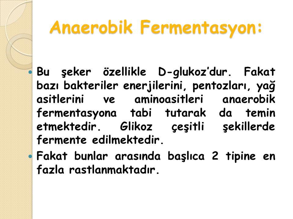 Anaerobik Fermentasyon: Bu şeker özellikle D-glukoz'dur.
