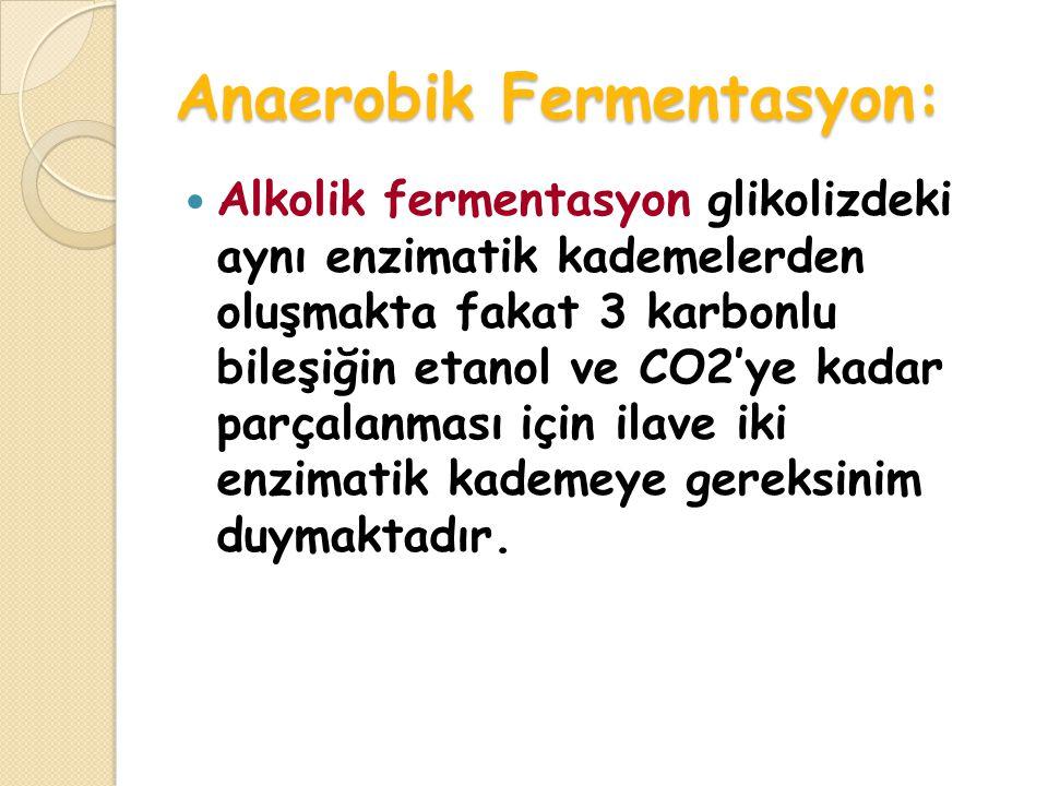 Anaerobik Fermentasyon: Alkolik fermentasyon glikolizdeki aynı enzimatik kademelerden oluşmakta fakat 3 karbonlu bileşiğin etanol ve CO2'ye kadar parçalanması için ilave iki enzimatik kademeye gereksinim duymaktadır.