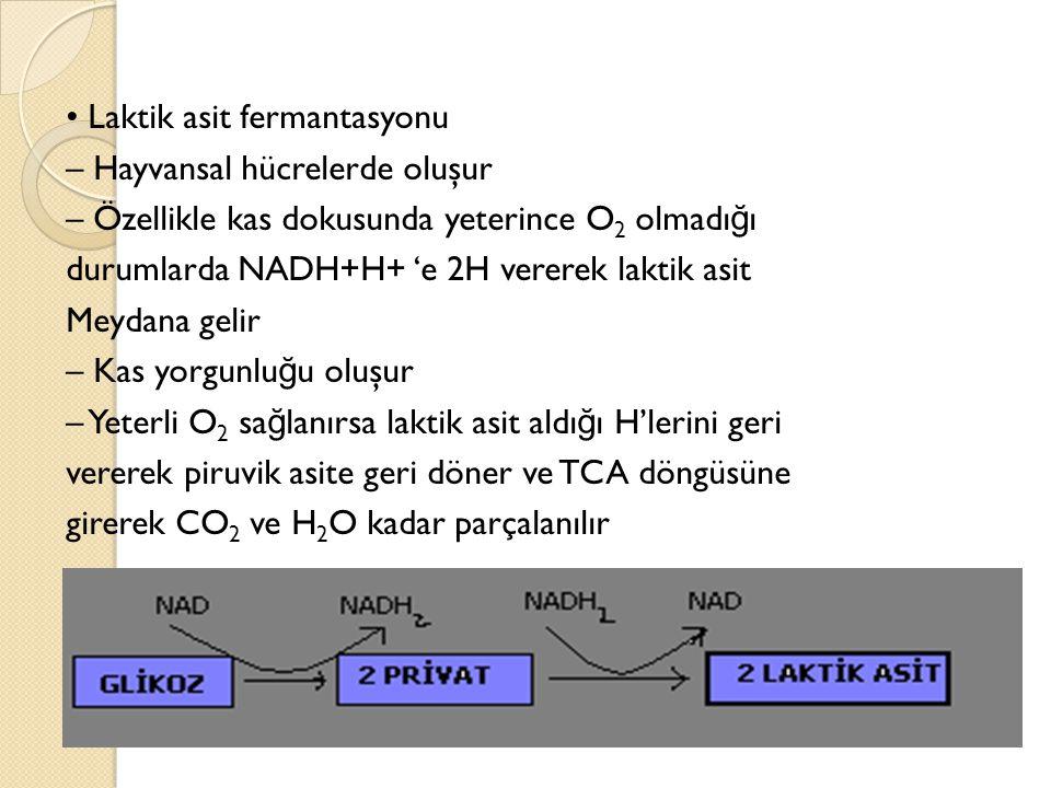 Laktik asit fermantasyonu – Hayvansal hücrelerde oluşur – Özellikle kas dokusunda yeterince O 2 olmadı ğ ı durumlarda NADH+H+ 'e 2H vererek laktik asit Meydana gelir – Kas yorgunlu ğ u oluşur – Yeterli O 2 sa ğ lanırsa laktik asit aldı ğ ı H'lerini geri vererek piruvik asite geri döner ve TCA döngüsüne girerek CO 2 ve H 2 O kadar parçalanılır