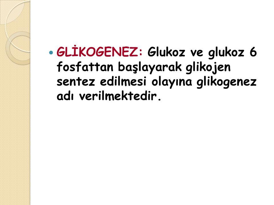 GLİKOGENEZ: Glukoz ve glukoz 6 fosfattan başlayarak glikojen sentez edilmesi olayına glikogenez adı verilmektedir.