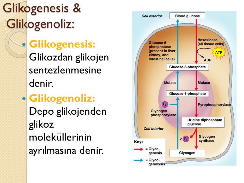 Glikogenesis & Glikogenoliz: Glikogenesis: Glikozdan glikojen sentezlenmesine denir.