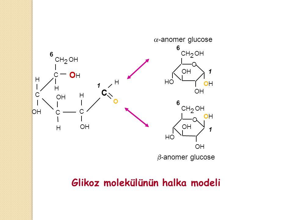 OH OHOH H H H H H C C C C C O CH 2 OH 6 1 O CH 2 OH OHOH 6 1  -anomer glucose O CH 2 OH OHOH 6 1  - anomer glucose Glikoz molekülünün halka modeli