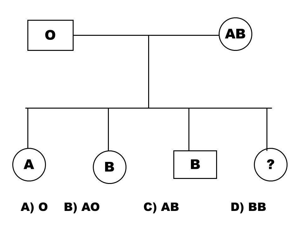 Kan grubu AB olan bir kadınla O kan grubu olan erkek evleniyor. Çocukların kan grubları nasıl oluşur? A B kan grubları eşbaskın O çekinik