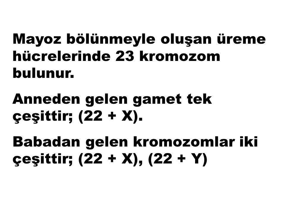"""Cinsiyet kromozomları şekillerinden dolayı """"X"""" ve """"Y"""" kromozomları olarak adlandırılır. Cinsiyet kromozomları kadında XX, erkekte XY'dir."""