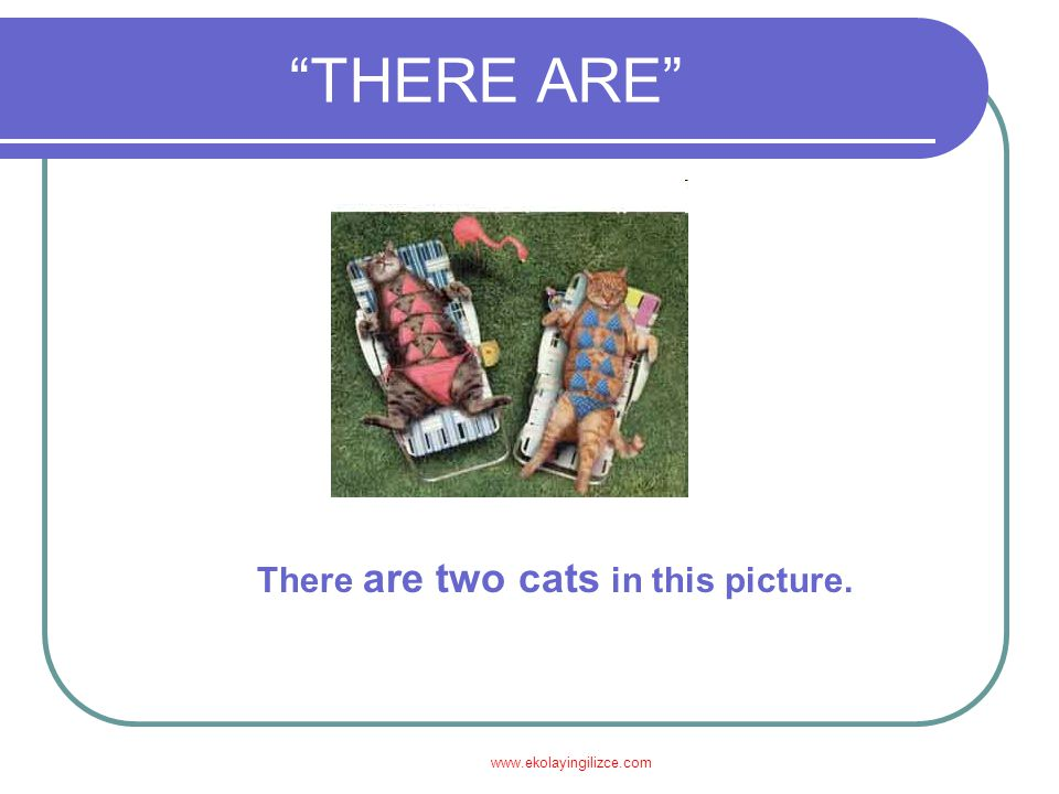 "www.ekolayingilizce.com ""THERE ARE"" There are two cats in this picture."