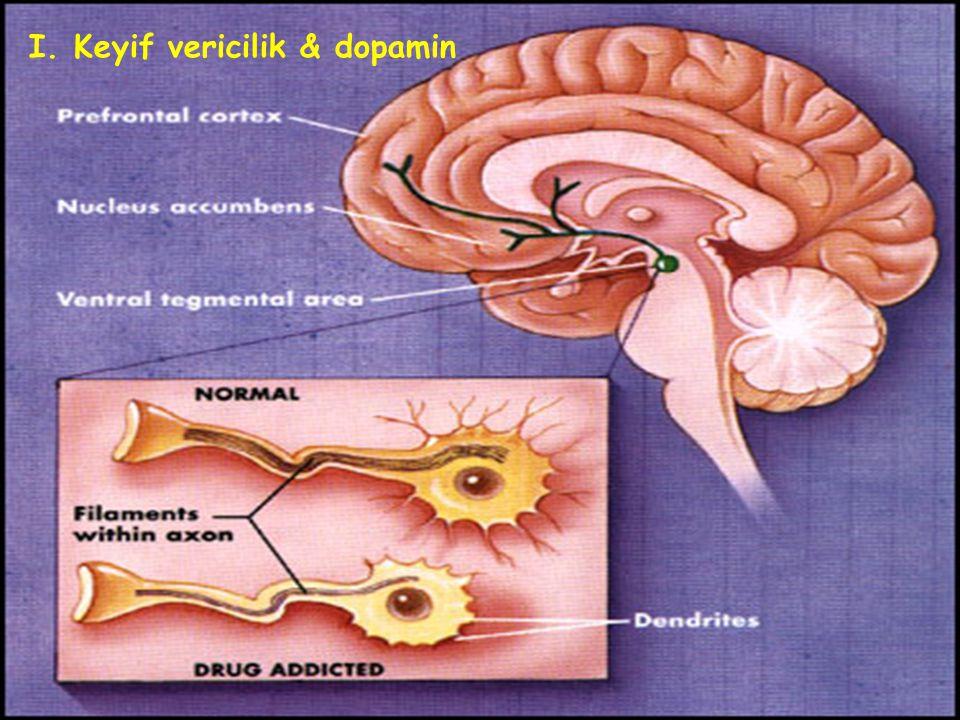 I. Keyif vericilik & dopamin