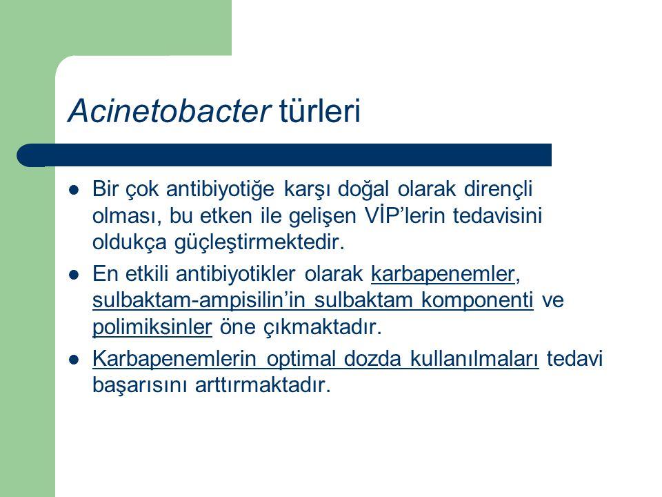 Acinetobacter türleri Bir çok antibiyotiğe karşı doğal olarak dirençli olması, bu etken ile gelişen VİP'lerin tedavisini oldukça güçleştirmektedir. En