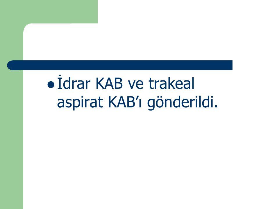 İdrar KAB ve trakeal aspirat KAB'ı gönderildi.