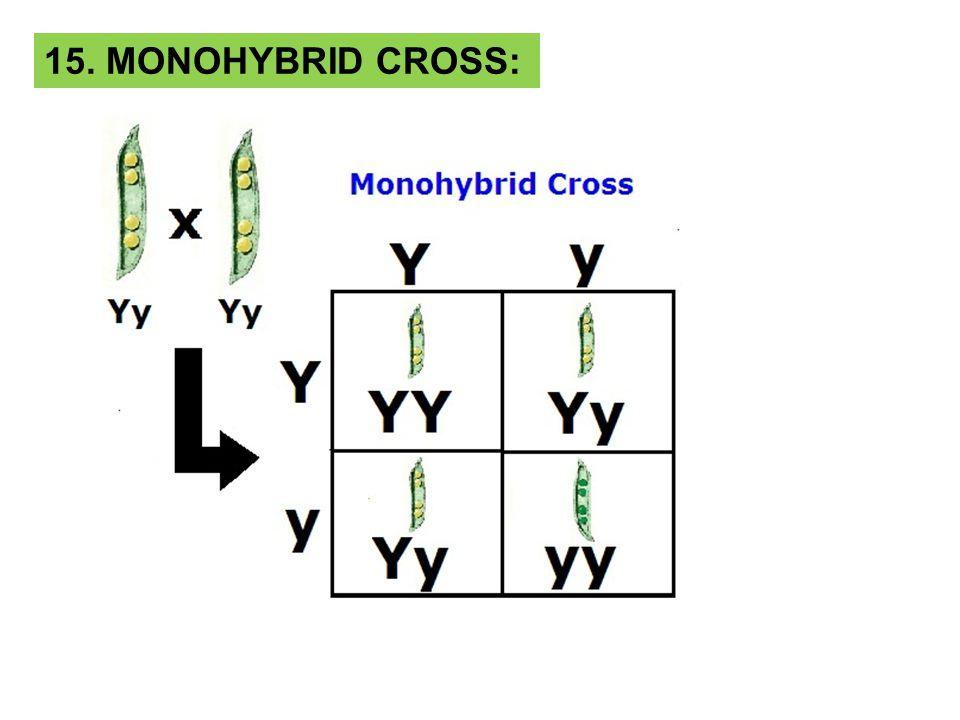 15. MONOHYBRID CROSS: