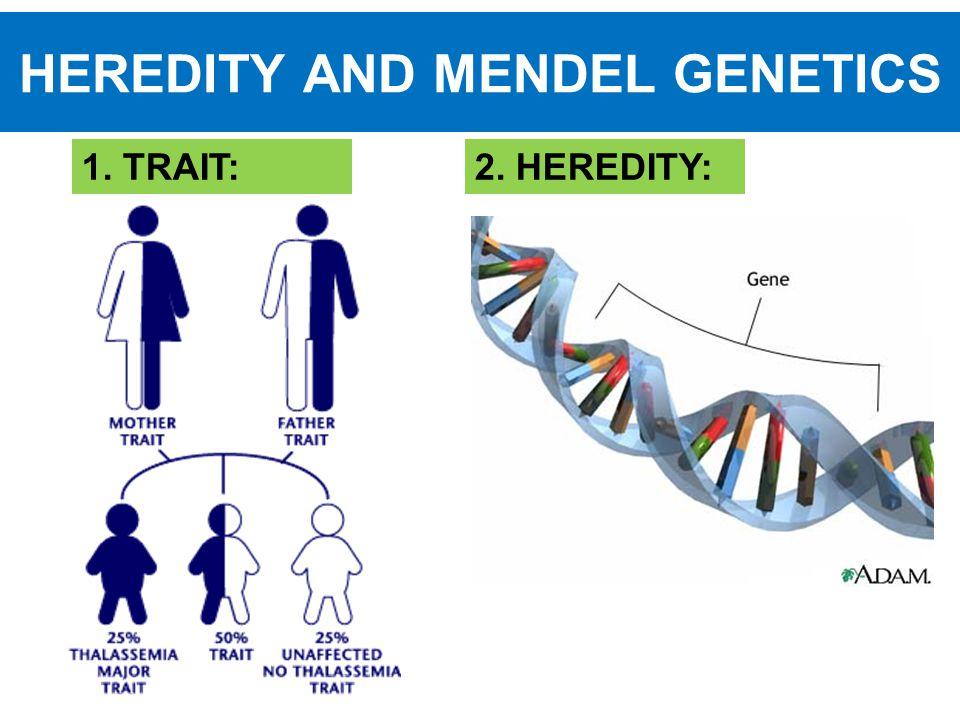 HEREDITY AND MENDEL GENETICS 1. TRAIT:2. HEREDITY: