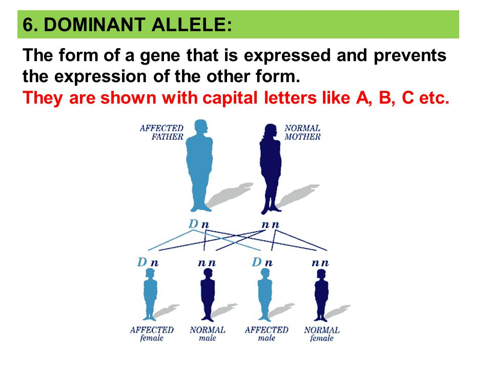 7.RECESSIVE ALLELE: The form of a gene that is expressed only when paired with a gene coding for the same trait.
