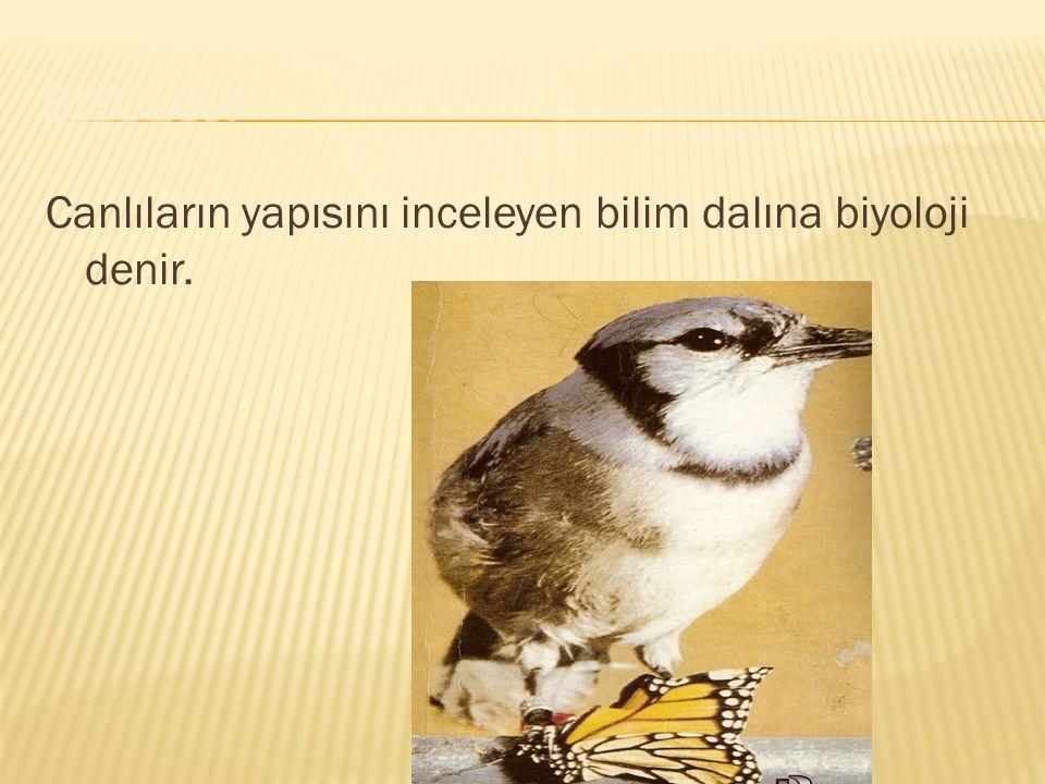 Canlıların yapısını inceleyen bilim dalına biyoloji denir.