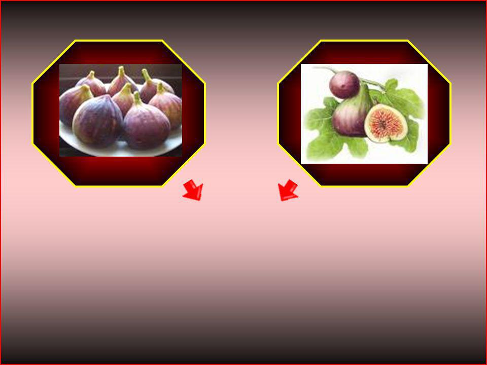HİKMET SIRMA (ARİFİYE/SAKARYA) 1-A SINIFI 17 incir
