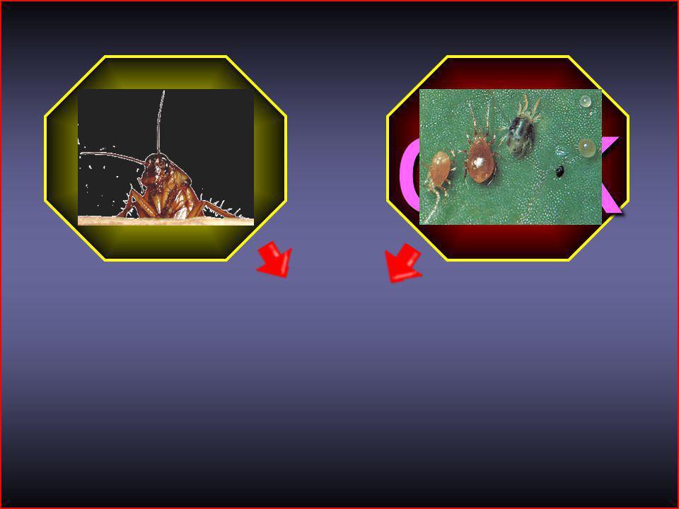 HİKMET SIRMA (ARİFİYE/SAKARYA) 1-A SINIFI 19 böcek