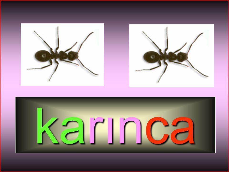 HİKMET SIRMA (ARİFİYE/SAKARYA) 1-A SINIFI 53 Giriş Toplantının amacını belirtin. Kendinizi tanıtın. karınca