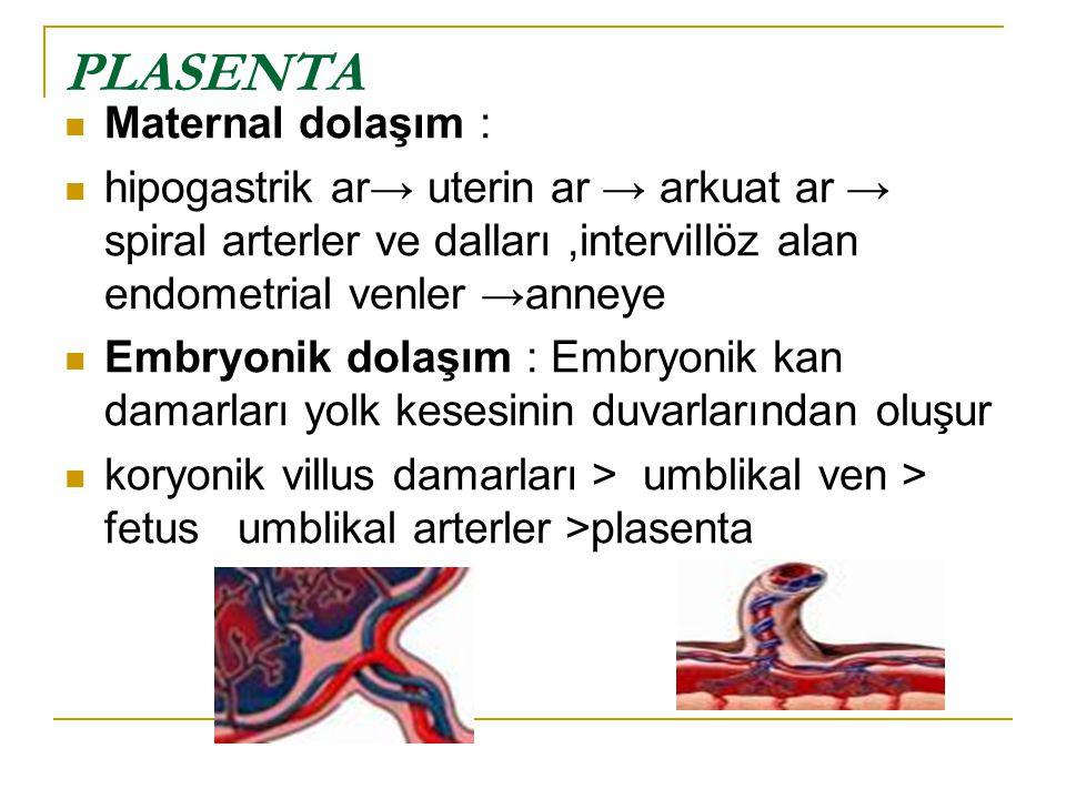 PLASENTA Maternal dolaşım : hipogastrik ar→ uterin ar → arkuat ar → spiral arterler ve dalları,intervillöz alan endometrial venler →anneye Embryonik d