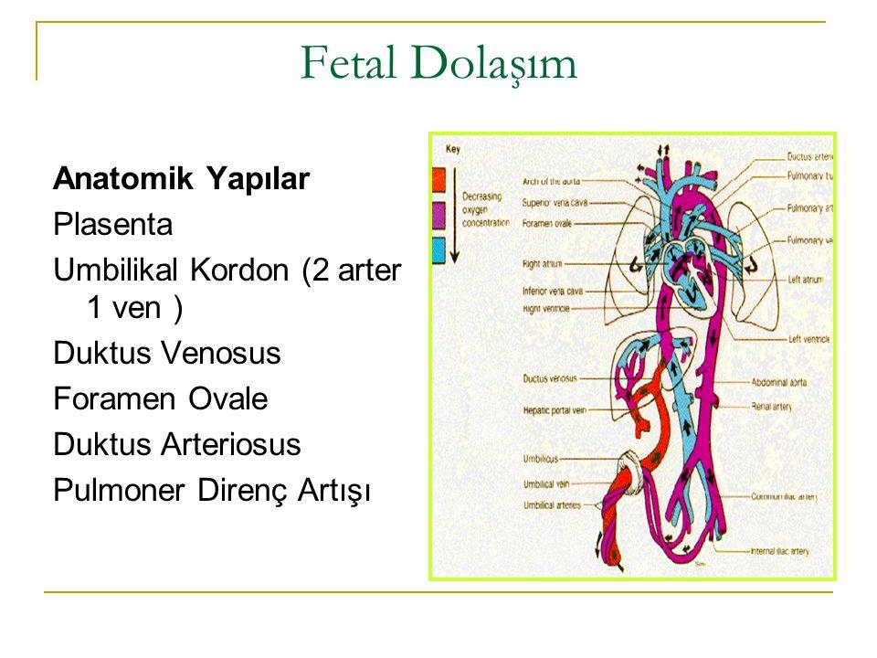 Fetal Dolaşım Anatomik Yapılar Plasenta Umbilikal Kordon (2 arter 1 ven ) Duktus Venosus Foramen Ovale Duktus Arteriosus Pulmoner Direnç Artışı