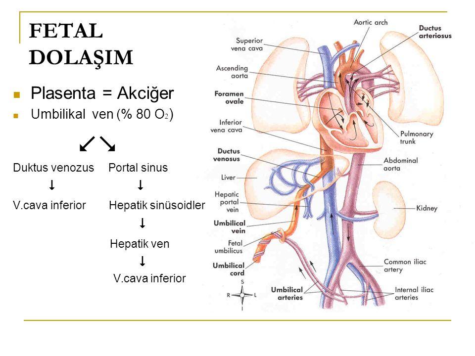 FETAL DOLAŞIM Plasenta = Akciğer Umbilikal ven (% 80 O  )  Duktus venozus Portal sinus  V.cava inferior Hepatik sinüsoidler  Hepatik ven  V.cava