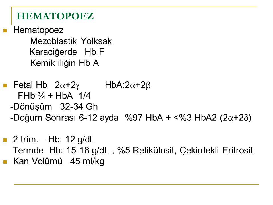 HEMATOPOEZ Hematopoez Mezoblastik Yolksak Karaciğerde Hb F Kemik iliğin Hb A Fetal Hb 2  +2  HbA:2  +2  FHb ¾ + HbA 1/4 -Dönüşüm 32-34 Gh -Doğum S