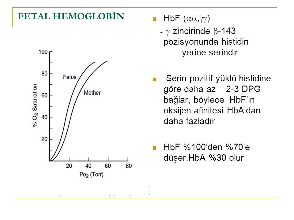 FETAL HEMOGLOBİN HbF ( ,  ) -  zincirinde  -143 pozisyonunda histidin yerine serindir Serin pozitif yüklü histidine göre daha az 2-3 DPG bağlar,