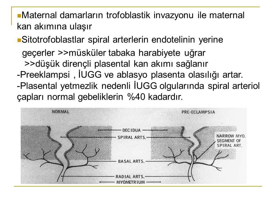 Maternal damarların trofoblastik invazyonu ile maternal kan akımına ulaşır Sitotrofoblastlar spiral arterlerin endotelinin yerine geçerler >>müsküler