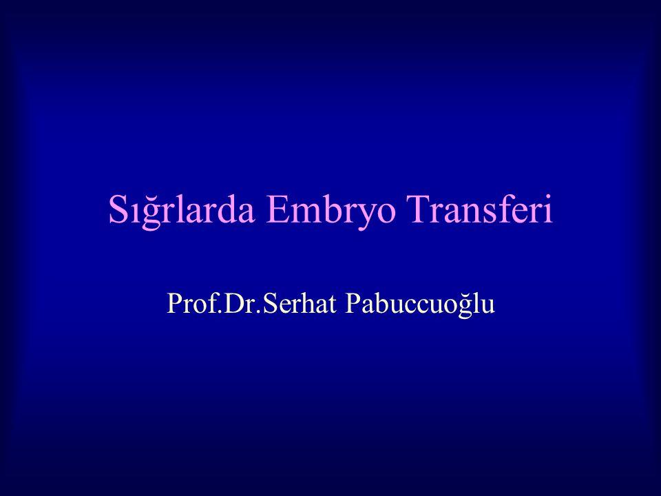 Sığrlarda Embryo Transferi Prof.Dr.Serhat Pabuccuoğlu