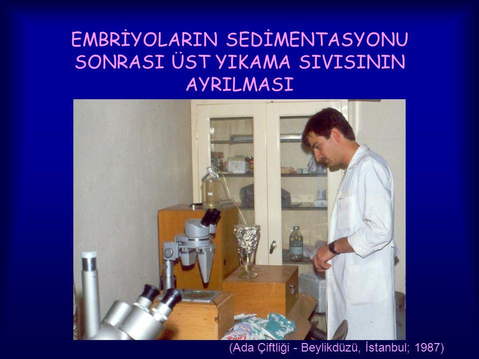 EMBRİYOLARIN SEDİMENTASYONU SONRASI ÜST YIKAMA SIVISININ AYRILMASI (Ada Çiftliği - Beylikdüzü, İstanbul; 1987)