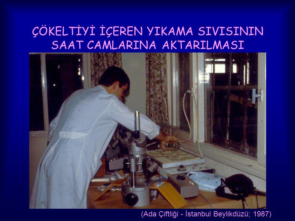 ÇÖKELTİYİ İÇEREN YIKAMA SIVISININ SAAT CAMLARINA AKTARILMASI (Ada Çiftliği - İstanbul Beylikdüzü; 1987)