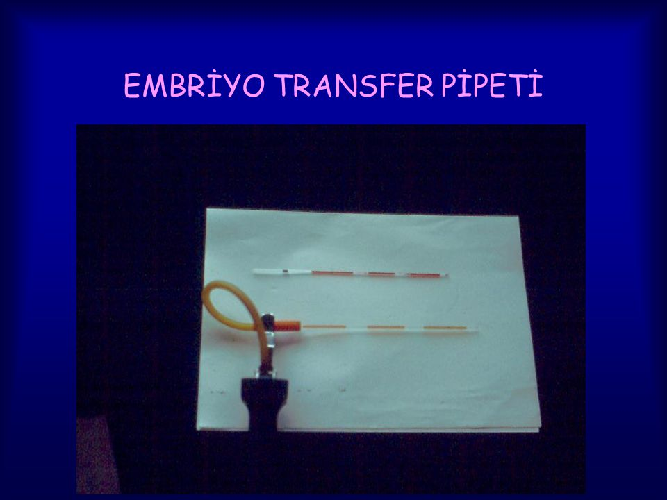 EMBRİYO TRANSFER PİPETİ