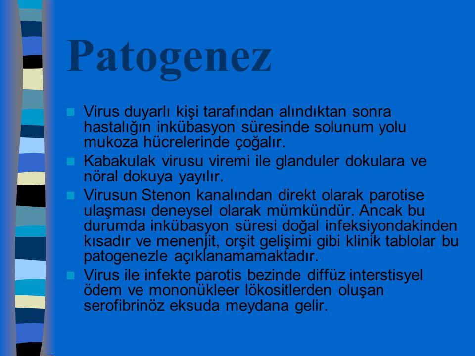 Patogenez Virus duyarlı kişi tarafından alındıktan sonra hastalığın inkübasyon süresinde solunum yolu mukoza hücrelerinde çoğalır. Kabakulak virusu vi