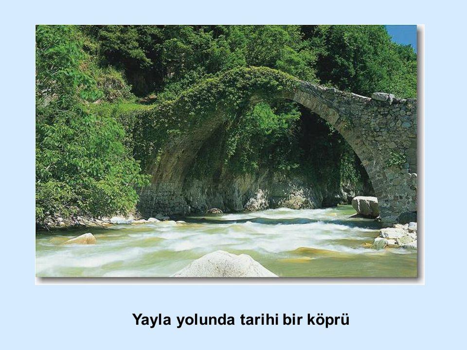 Yayla yolunda tarihi bir köprü