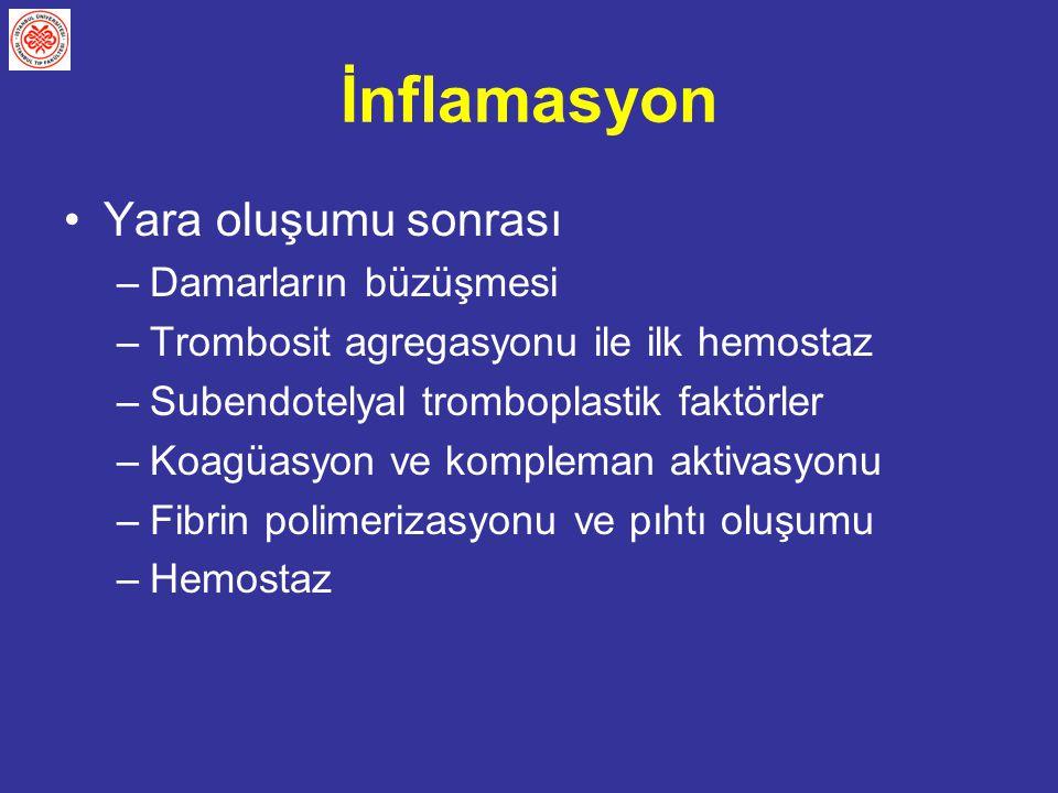 İnflamasyon Yara oluşumu sonrası –Damarların büzüşmesi –Trombosit agregasyonu ile ilk hemostaz –Subendotelyal tromboplastik faktörler –Koagüasyon ve k