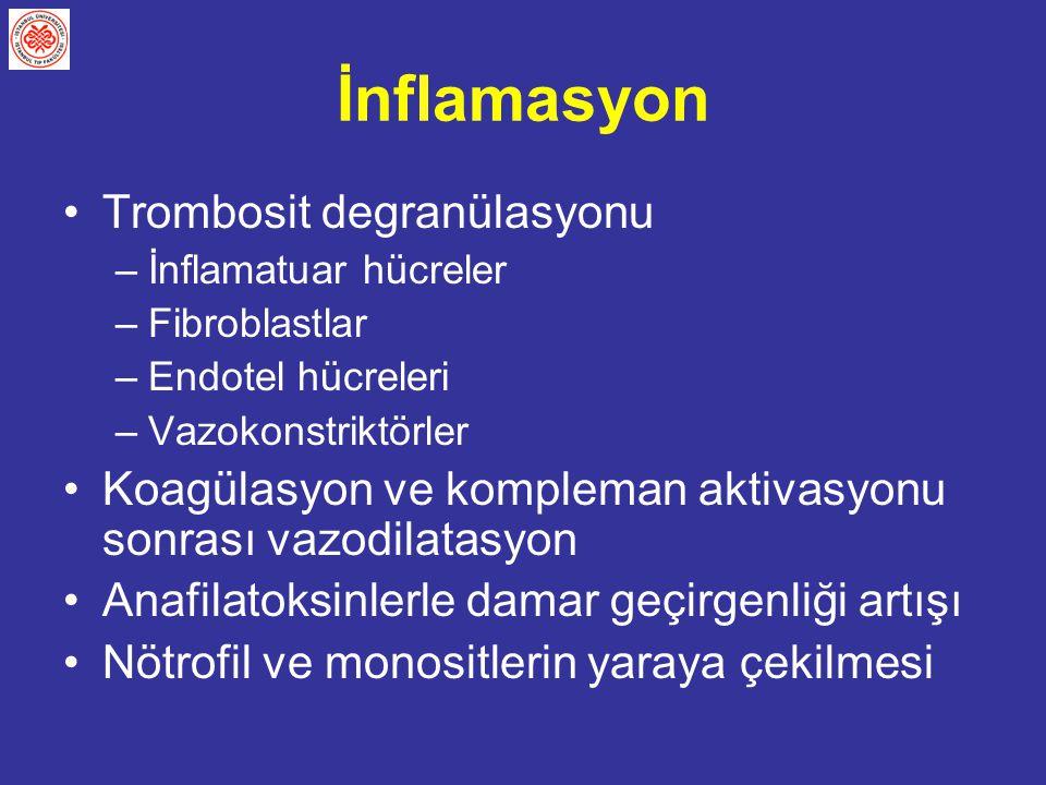 İnflamasyon Trombosit degranülasyonu –İnflamatuar hücreler –Fibroblastlar –Endotel hücreleri –Vazokonstriktörler Koagülasyon ve kompleman aktivasyonu