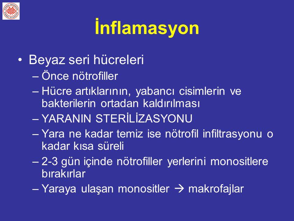 İnflamasyon Beyaz seri hücreleri –Önce nötrofiller –Hücre artıklarının, yabancı cisimlerin ve bakterilerin ortadan kaldırılması –YARANIN STERİLİZASYON