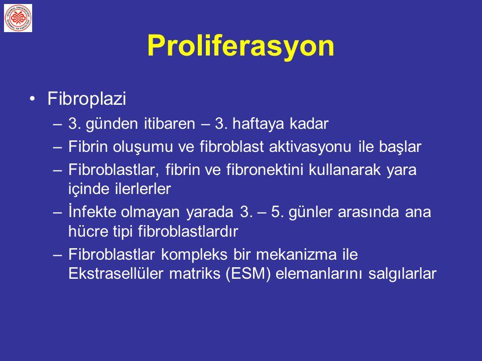 Proliferasyon Fibroplazi –3. günden itibaren – 3. haftaya kadar –Fibrin oluşumu ve fibroblast aktivasyonu ile başlar –Fibroblastlar, fibrin ve fibrone