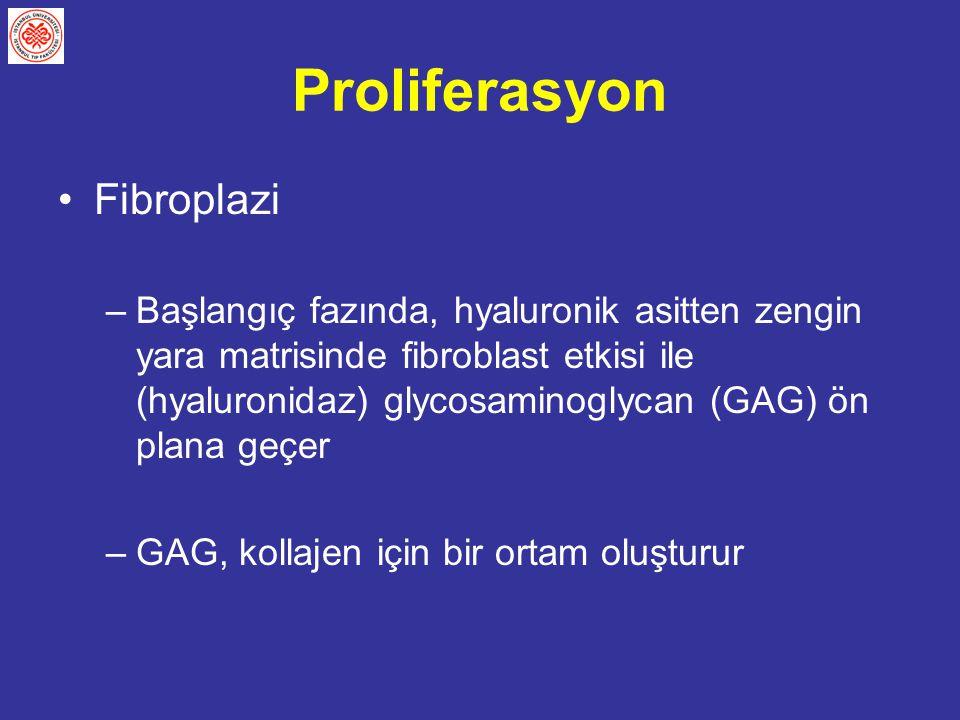 Proliferasyon Fibroplazi –Başlangıç fazında, hyaluronik asitten zengin yara matrisinde fibroblast etkisi ile (hyaluronidaz) glycosaminoglycan (GAG) ön