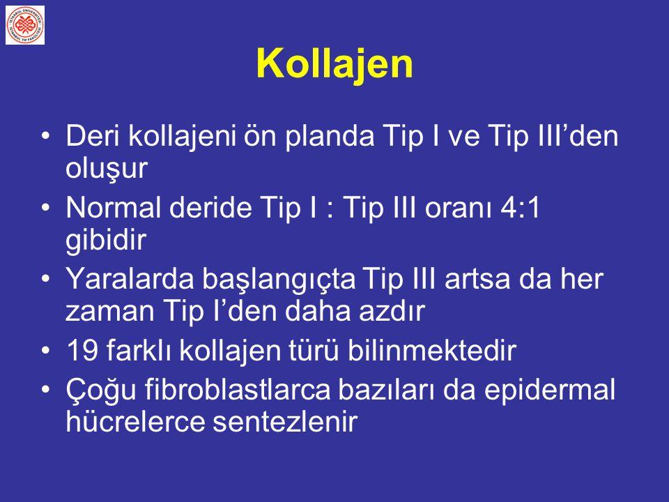 Kollajen Deri kollajeni ön planda Tip I ve Tip III'den oluşur Normal deride Tip I : Tip III oranı 4:1 gibidir Yaralarda başlangıçta Tip III artsa da h