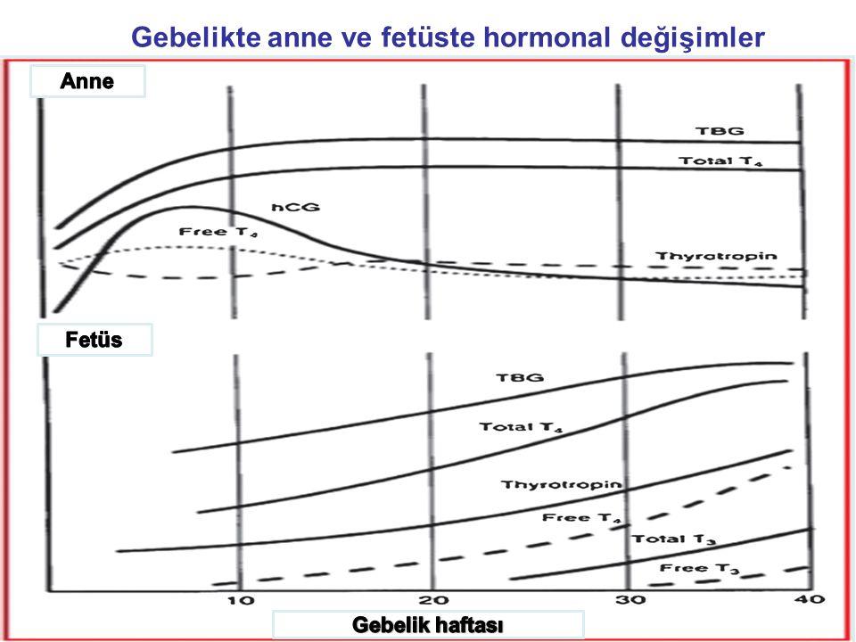 Gebelikte tiroid bezi GFR artışına bağlı olarak iyodun renal klirensi ve idrarla atılan iyot miktarı ↑ Fetüs tiroid hormonu sentezlemek için gerekli iyodu anneden sağlar Gebelerde günlük iyot gereksinimi artmıştır.
