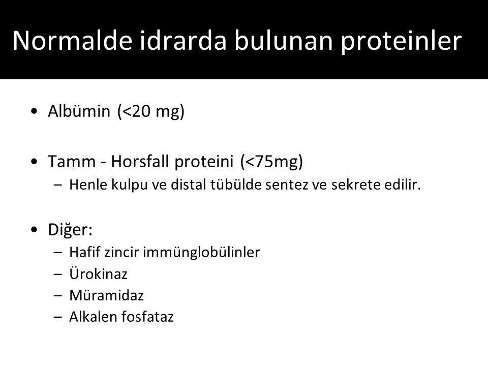 Albümin (<20 mg) Tamm - Horsfall proteini (<75mg) –Henle kulpu ve distal tübülde sentez ve sekrete edilir.