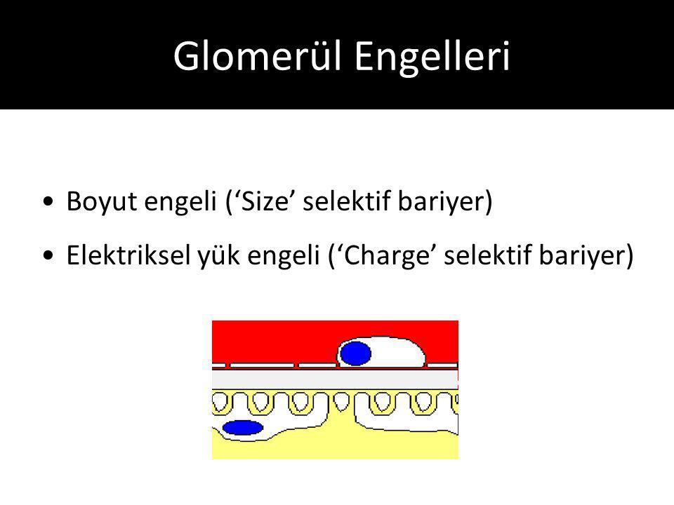 Glomerül Engelleri Boyut engeli ('Size' selektif bariyer) Elektriksel yük engeli ('Charge' selektif bariyer)