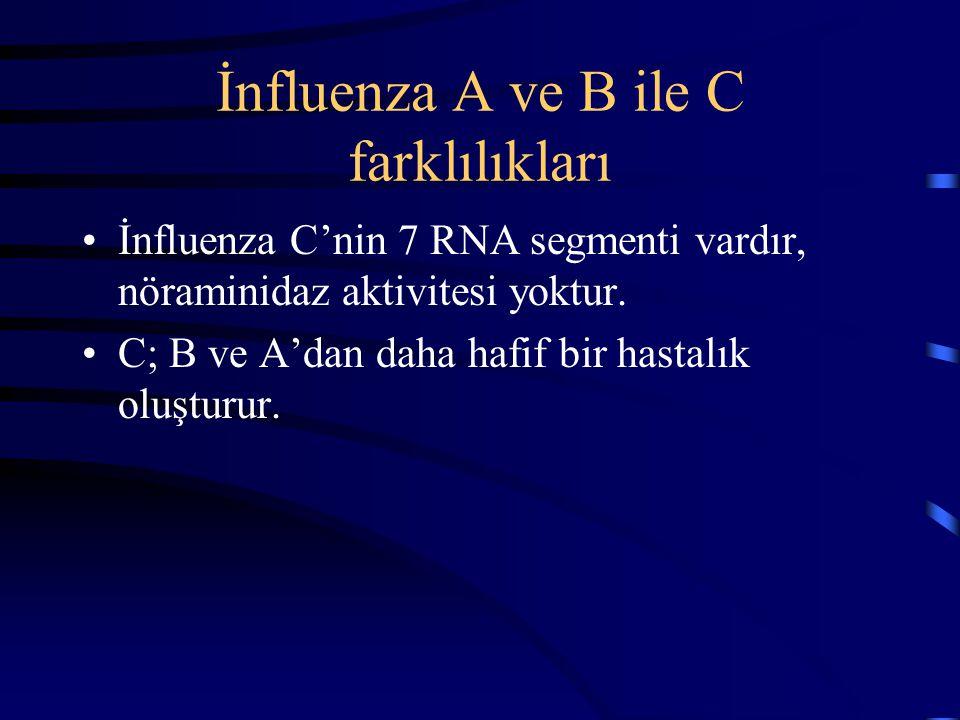 İnfluenza A ve B ile C farklılıkları İnfluenza C'nin 7 RNA segmenti vardır, nöraminidaz aktivitesi yoktur. C; B ve A'dan daha hafif bir hastalık oluşt