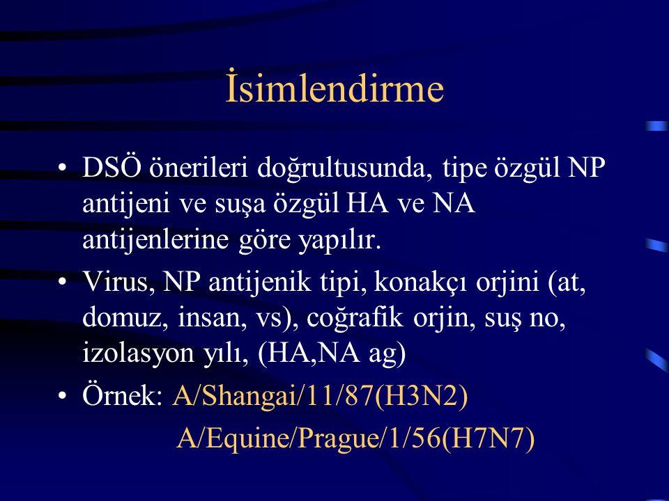 İsimlendirme DSÖ önerileri doğrultusunda, tipe özgül NP antijeni ve suşa özgül HA ve NA antijenlerine göre yapılır. Virus, NP antijenik tipi, konakçı