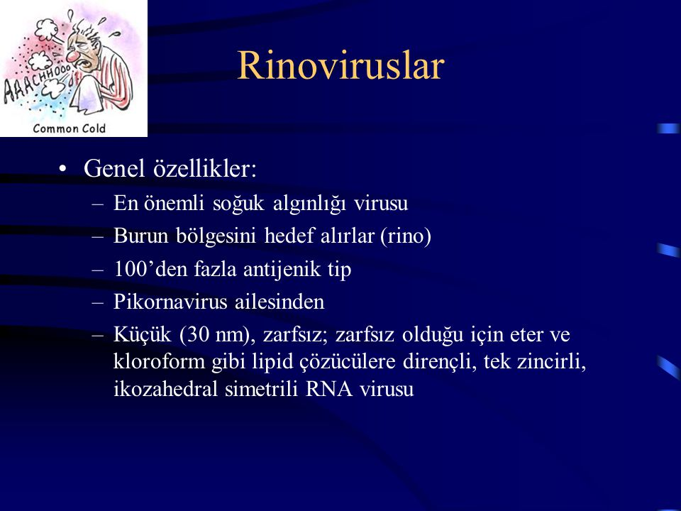 Rinoviruslar Genel özellikler: –En önemli soğuk algınlığı virusu –Burun bölgesini hedef alırlar (rino) –100'den fazla antijenik tip –Pikornavirus aile