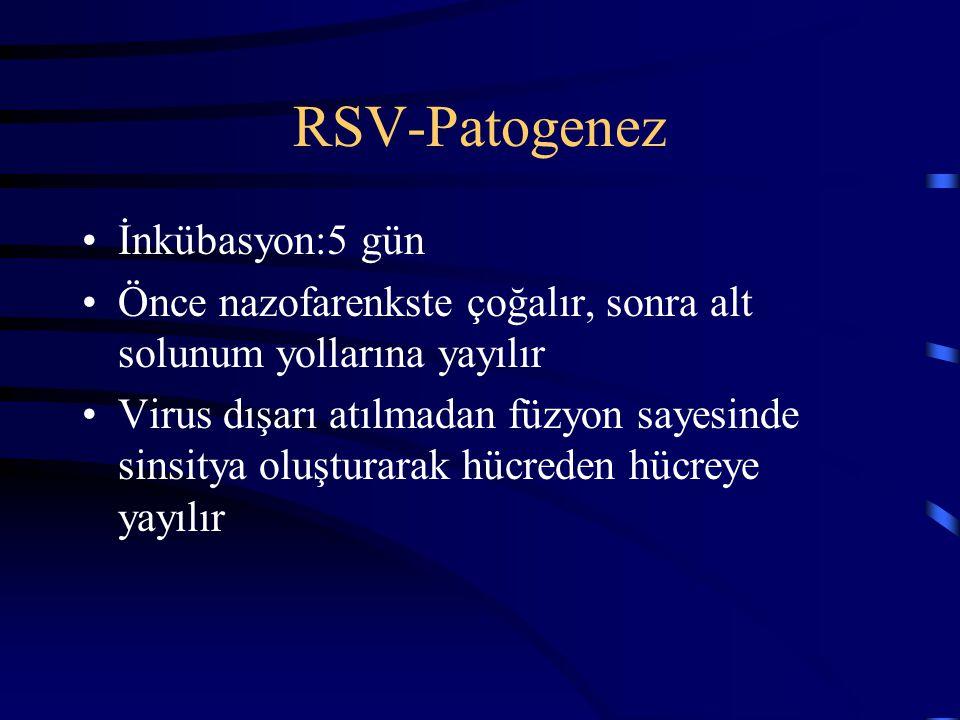 RSV-Patogenez İnkübasyon:5 gün Önce nazofarenkste çoğalır, sonra alt solunum yollarına yayılır Virus dışarı atılmadan füzyon sayesinde sinsitya oluştu