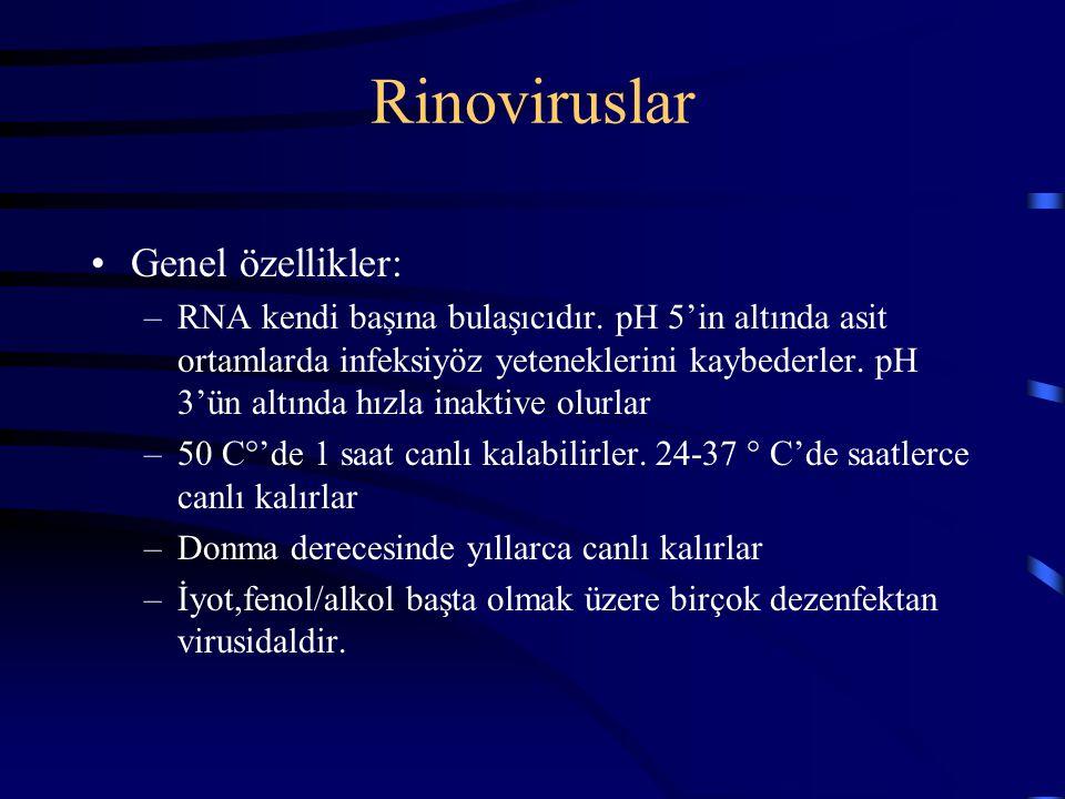 Rinoviruslar Genel özellikler: –RNA kendi başına bulaşıcıdır. pH 5'in altında asit ortamlarda infeksiyöz yeteneklerini kaybederler. pH 3'ün altında hı