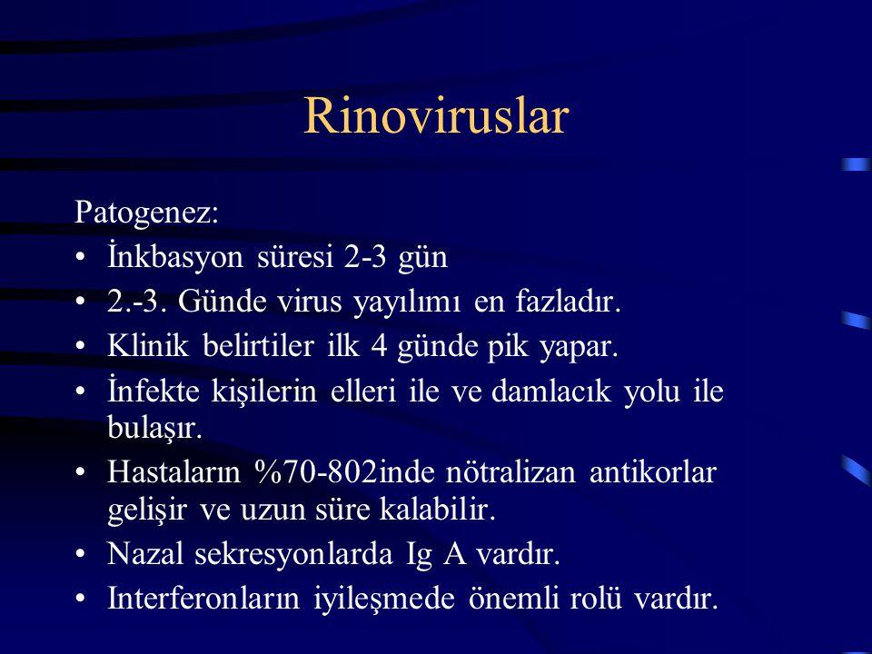 Rinoviruslar Patogenez: İnkbasyon süresi 2-3 gün 2.-3. Günde virus yayılımı en fazladır. Klinik belirtiler ilk 4 günde pik yapar. İnfekte kişilerin el