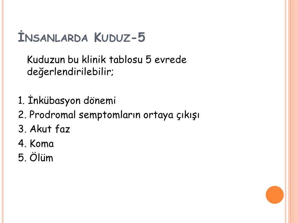 İ NSANLARDA K UDUZ -5 Kuduzun bu klinik tablosu 5 evrede değerlendirilebilir; 1.