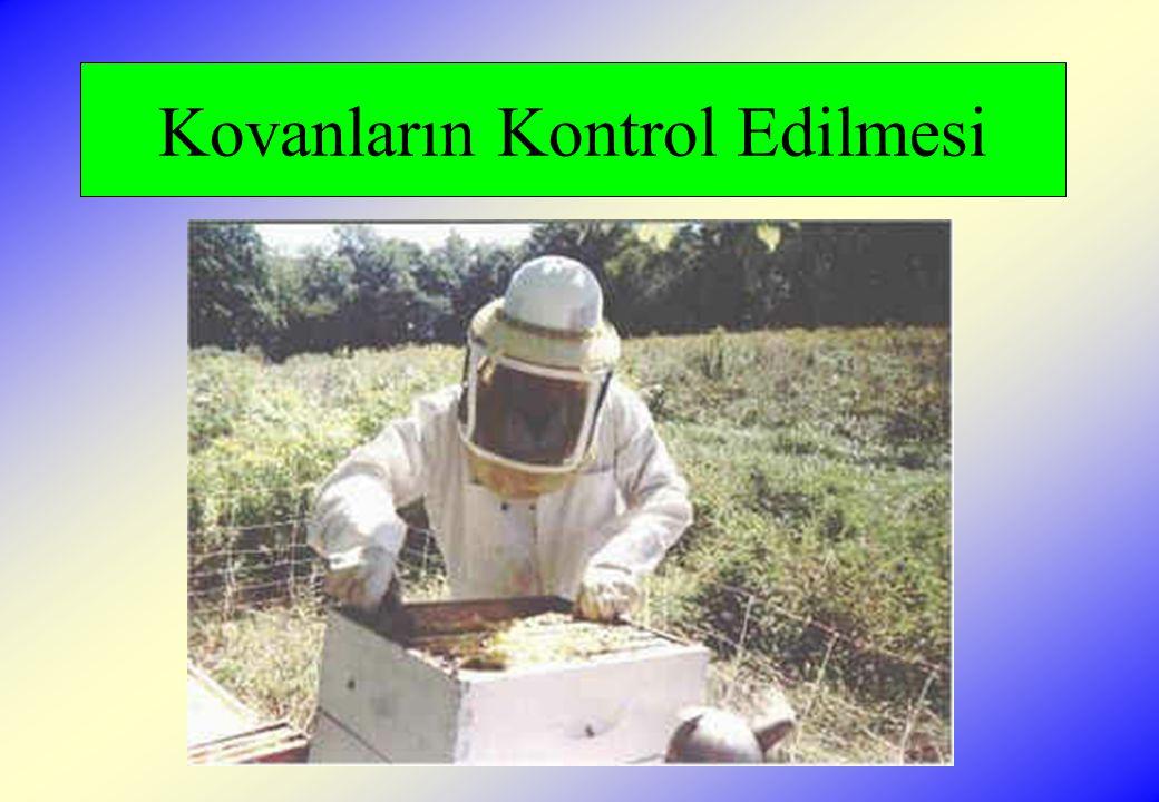 Besleme  Kolonide yeterli bal ve polen olsa dahi koloniler yeni kadro gelişimi için, 2:1 şeker şurubu veya çeşitli karışımla yapılan kekler ile beslenmelidirler.