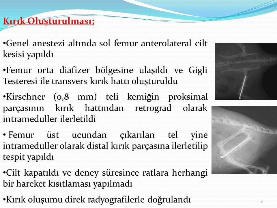 Kırık Oluşturulması; Genel anestezi altında sol femur anterolateral cilt kesisi yapıldı Femur orta diafizer bölgesine ulaşıldı ve Gigli Testeresi ile